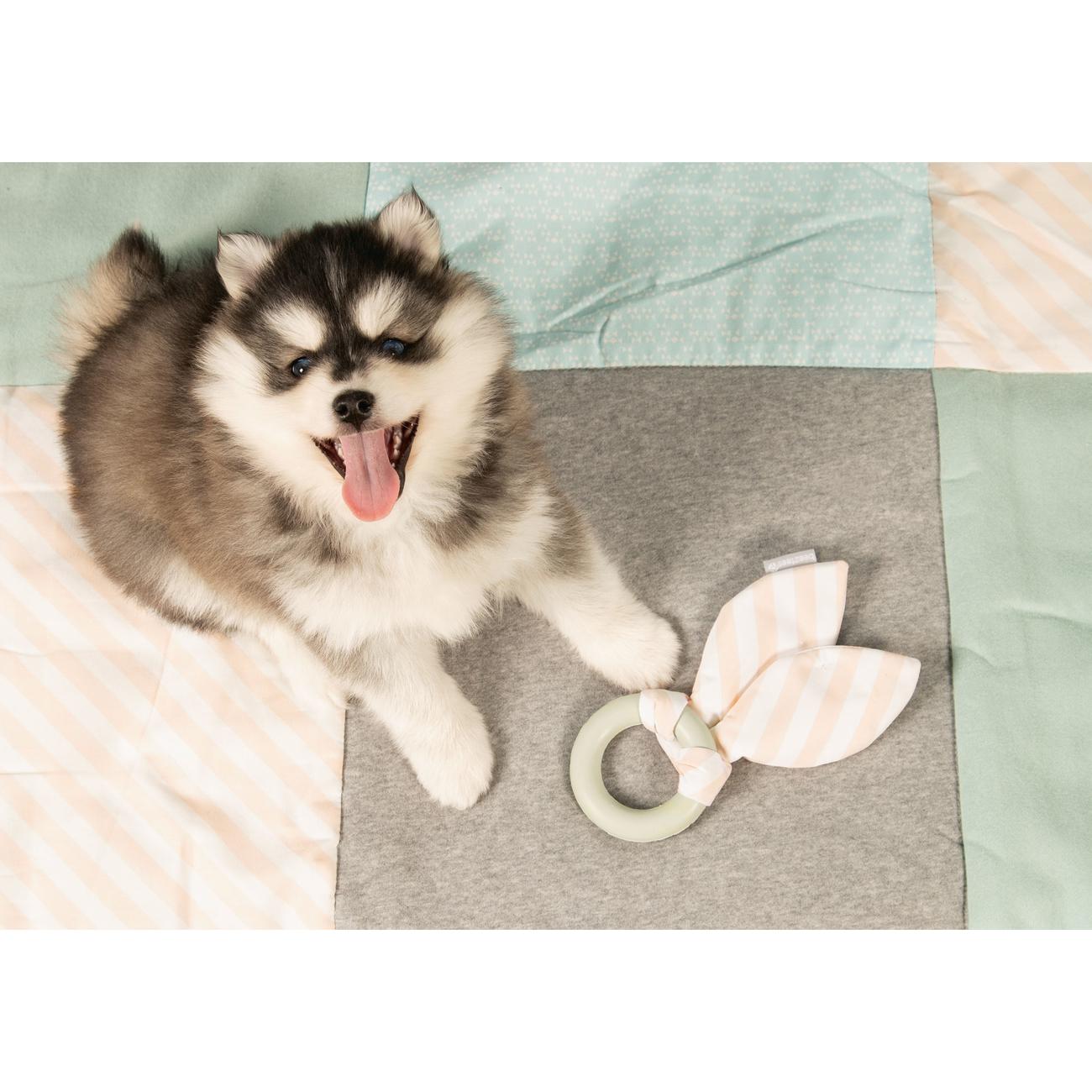 Beeztees Puppy Kauring für Welpen, Bild 4