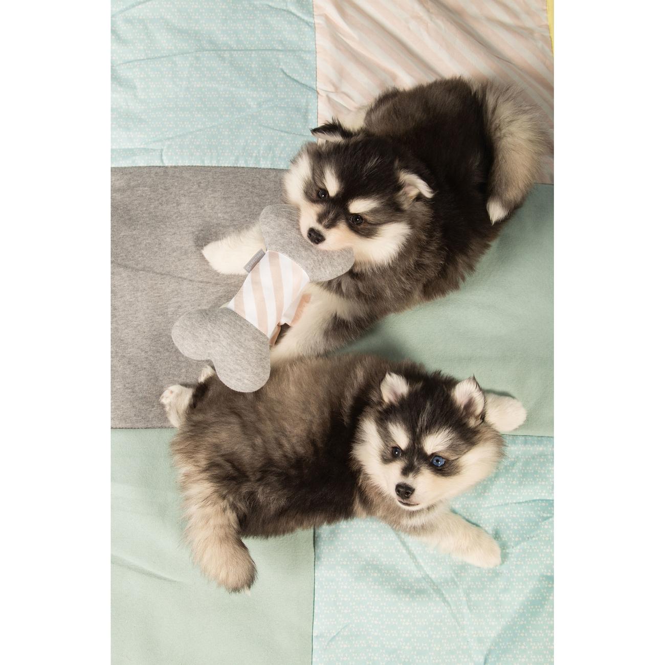 Beeztees Puppy Spielknochen, Bild 3