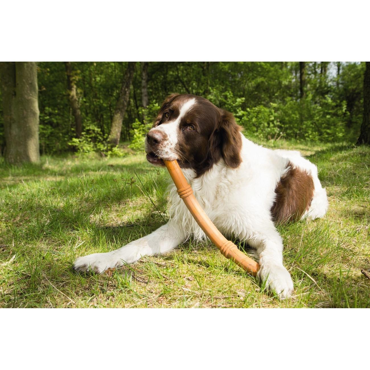 Beeztees Sumo Fit Stick Hundespielzeug, Bild 3