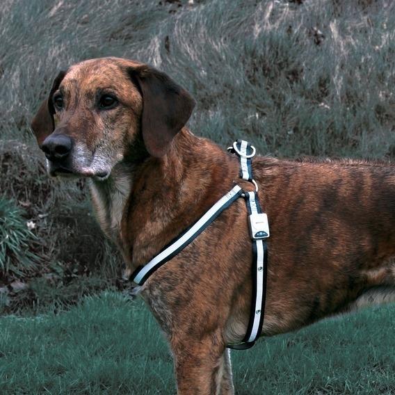 Trixie Blinkendes Hundegeschirr Reflash 13451