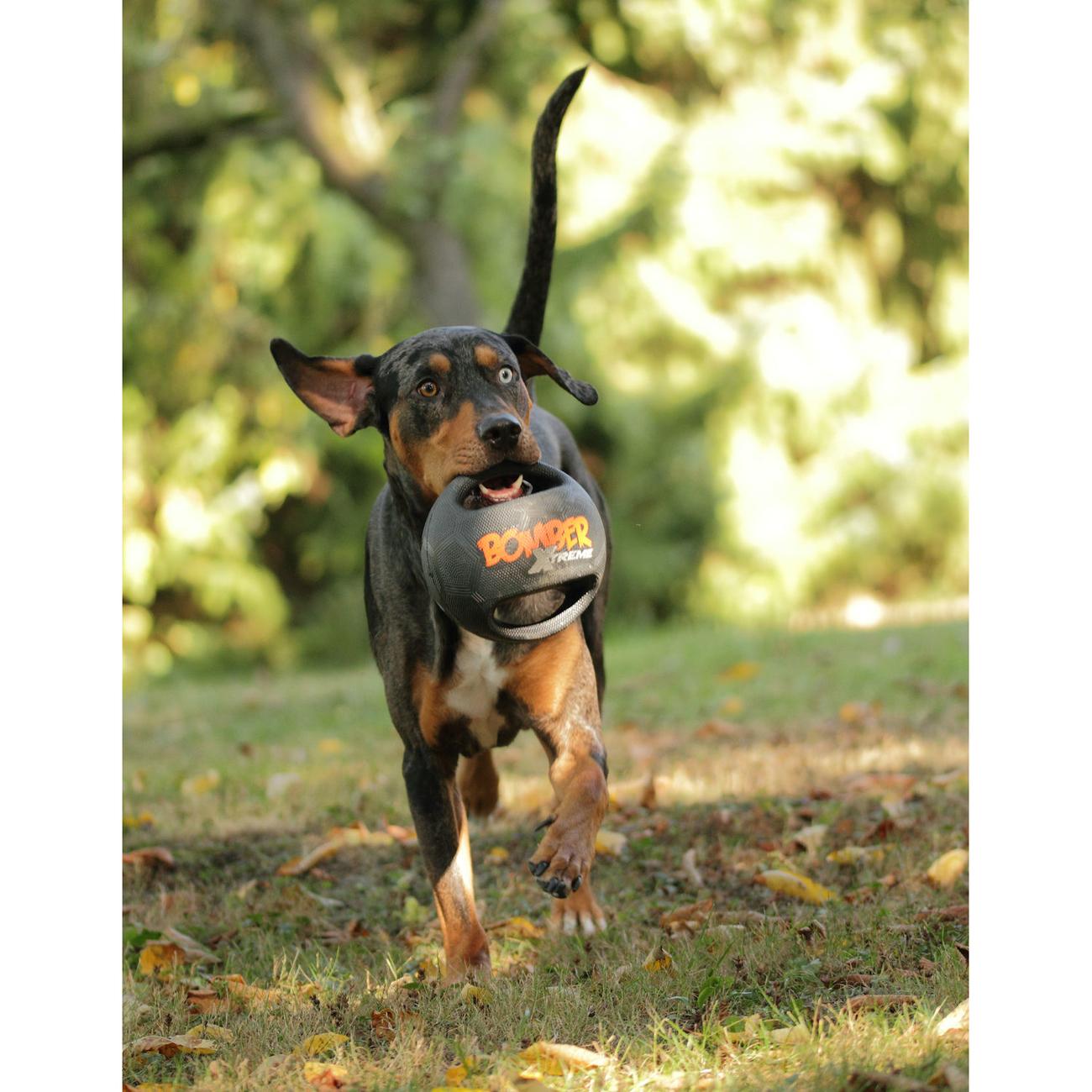 Bomber Xtreme Hundespielzeug, Bild 5