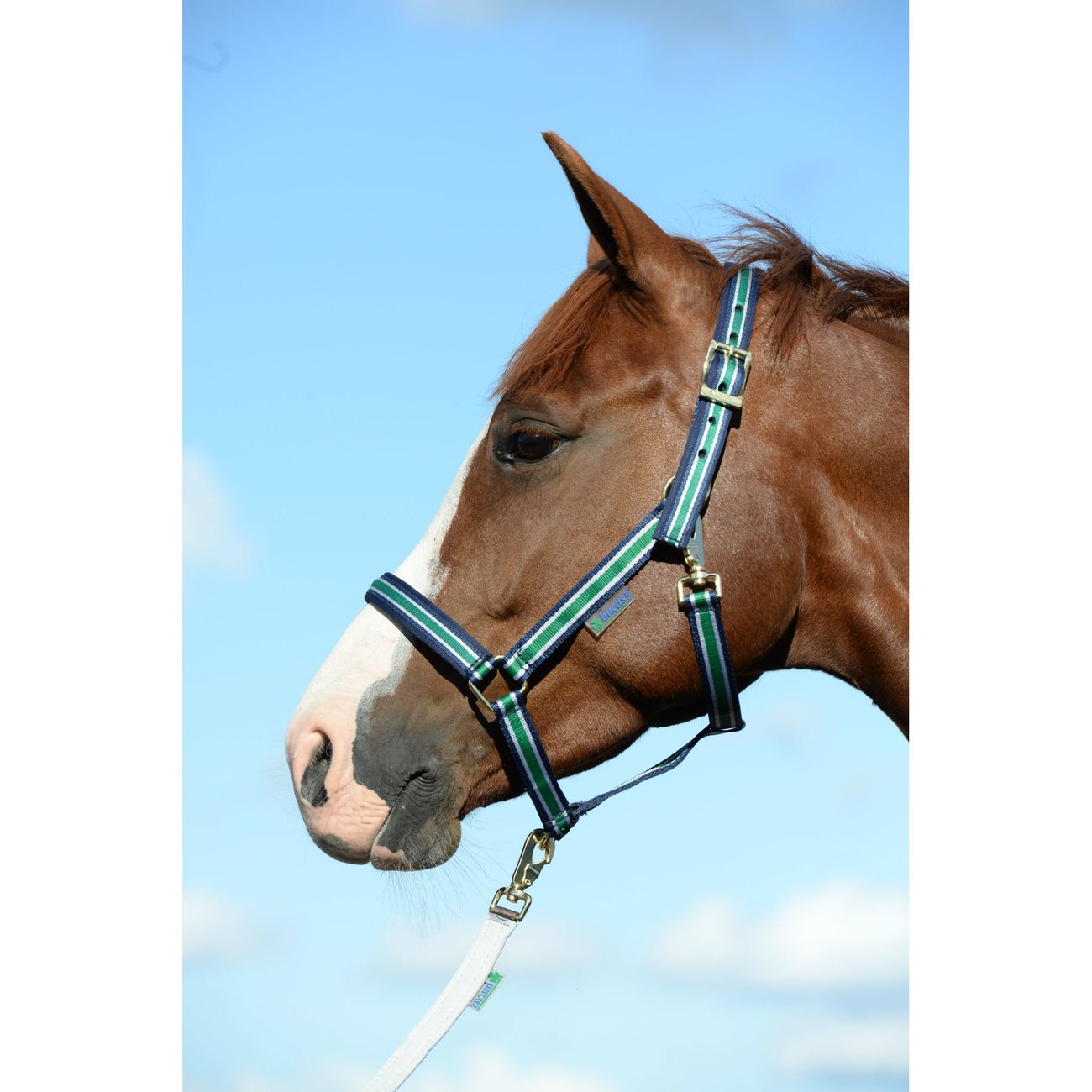 Bucas Pferdehalfter Dublin