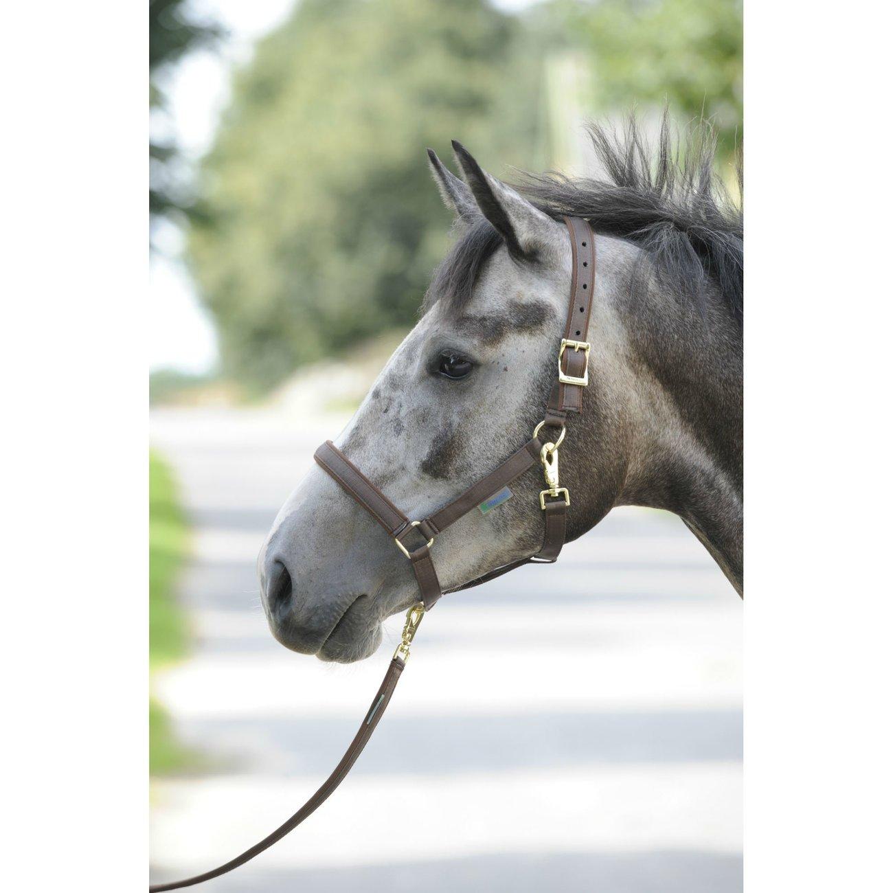 Bucas Pferdehalfter Dublin, Bild 5