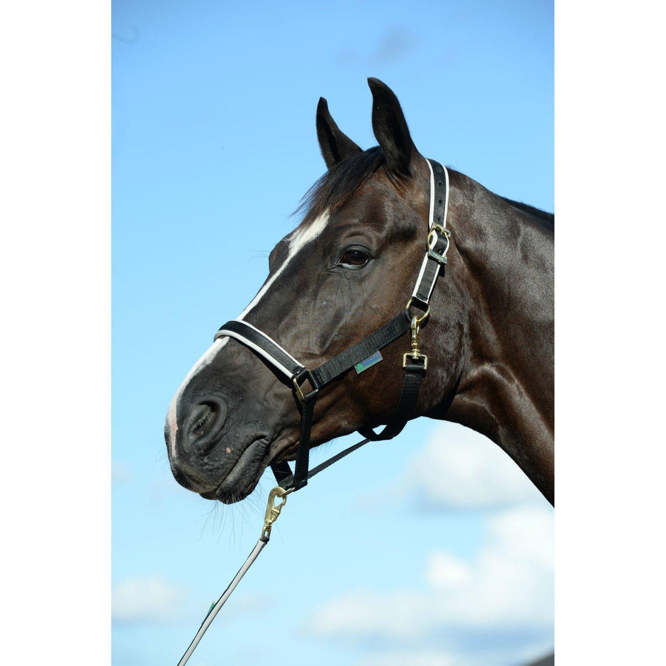 Bucas Pferdehalfter Dublin, Bild 7