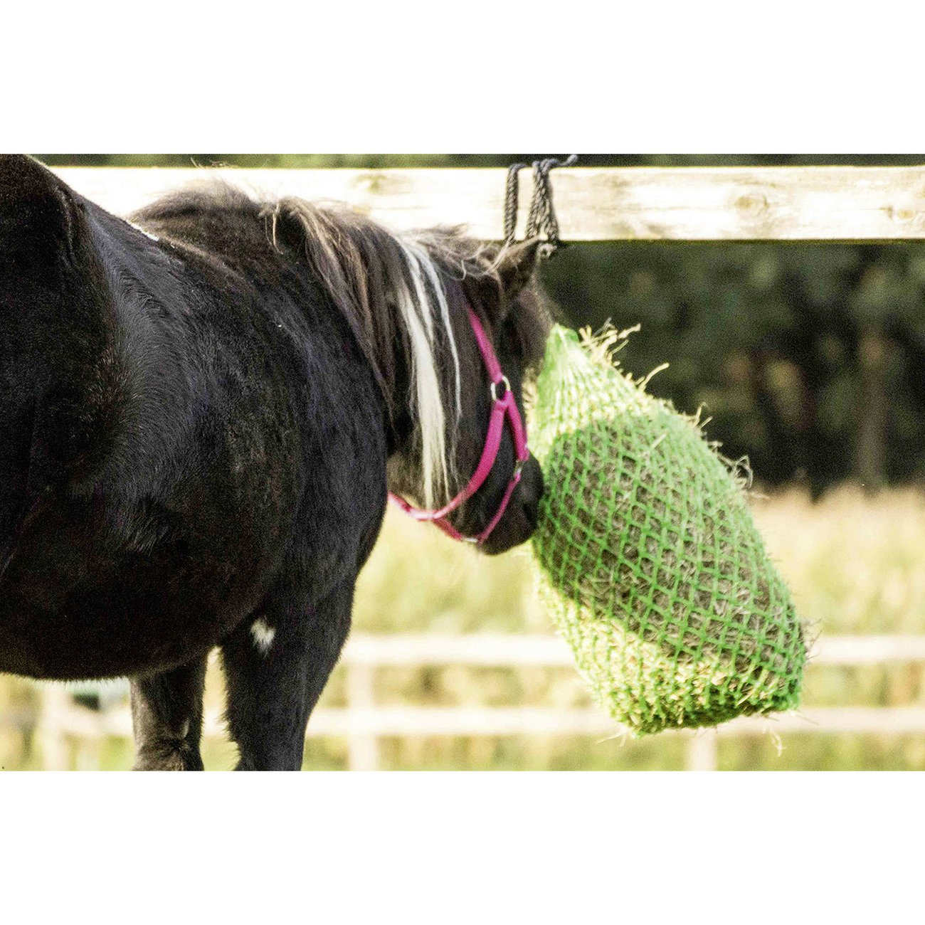 BUSSE Pony Heunetz Little, Bild 2