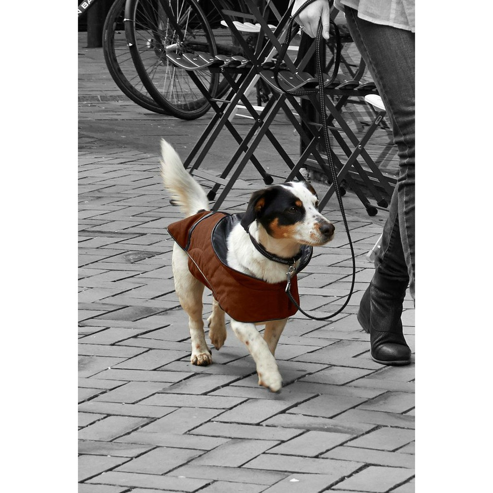 Buster City Hundemantel, Bild 6