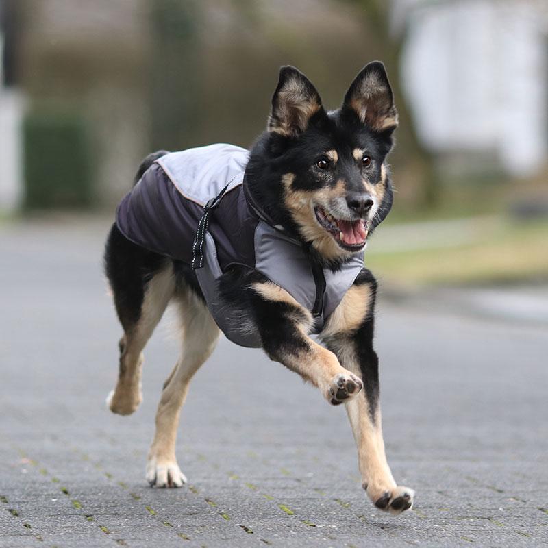 Buster Hundewintermantel, Bild 2