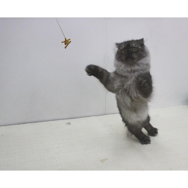 CatDancerProducts Cat Dancer Katzenspielzeug, Bild 5