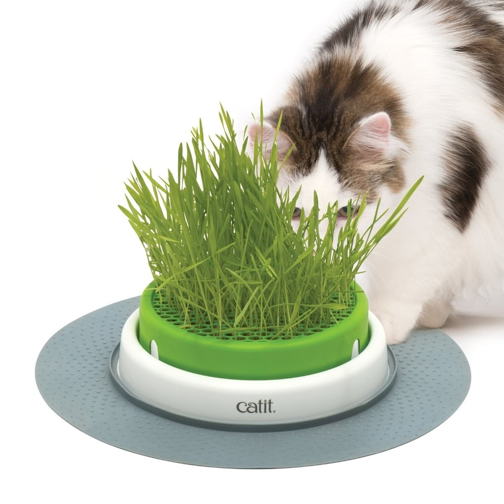 Catit Senses 2.0 Grastopf Grass Planter, Bild 2