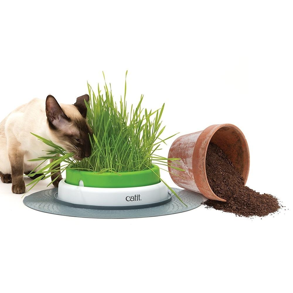 Catit Senses 2.0 Grastopf Grass Planter, Bild 3