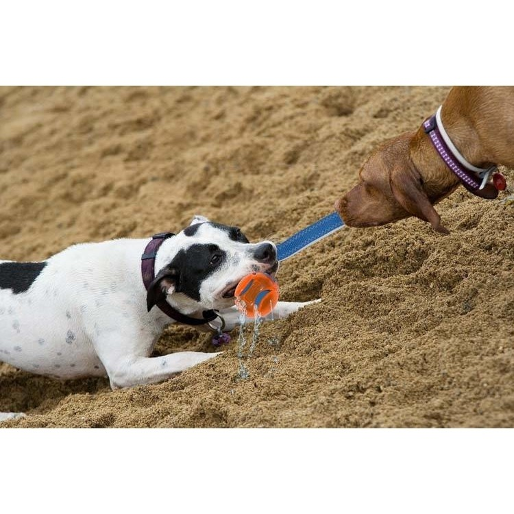 Chuckit Hydro Squeeze Duo Tug Wasserspielzeug für Hunde, Bild 2