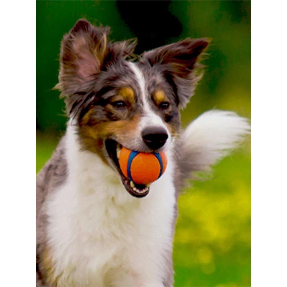 Chuckit! Ultra Ball, Bild 9