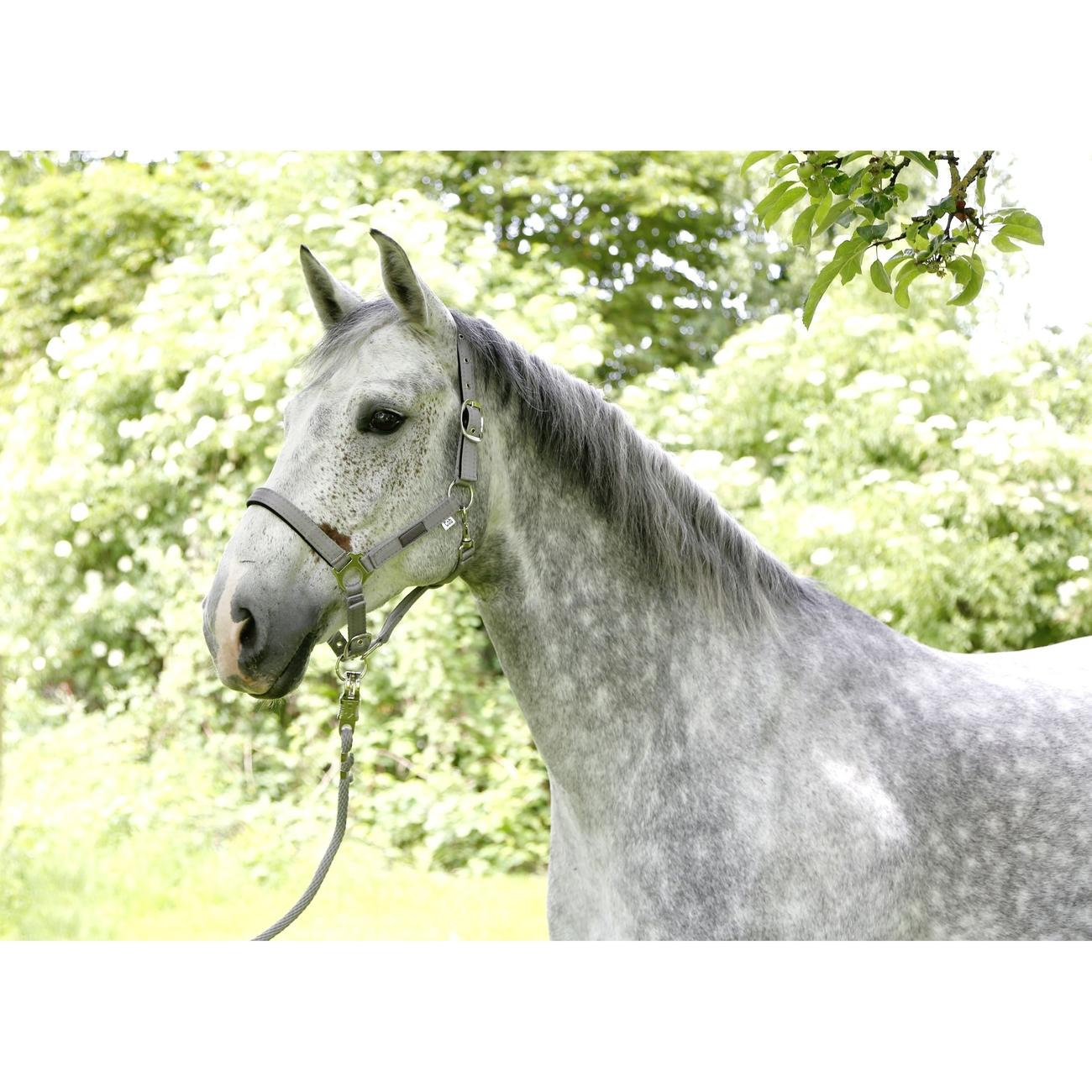 Covalliero Pferdehalfter Liam, Bild 3