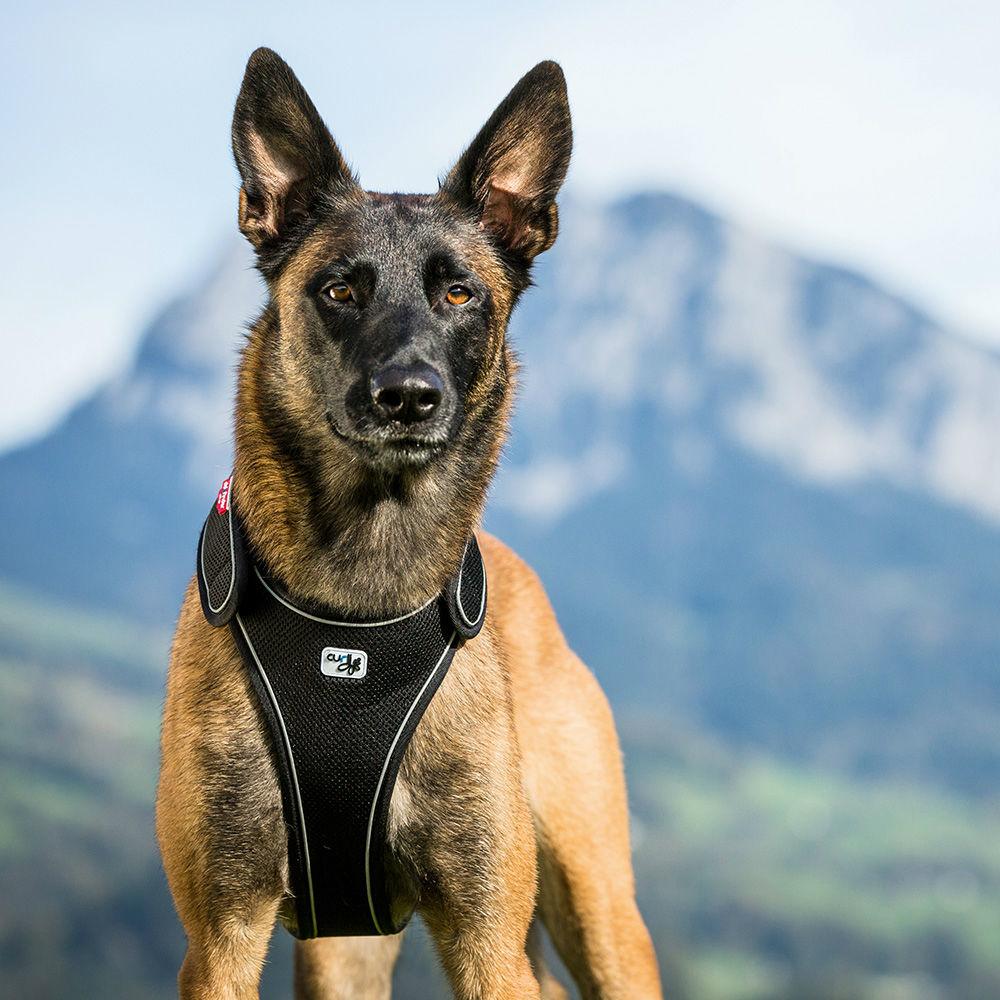 Curli Belka Geschirr für große Hunde, Bild 5