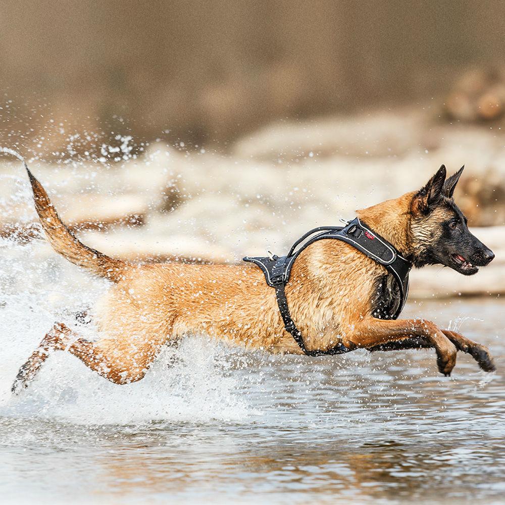 Curli Belka Geschirr für große Hunde, Bild 6