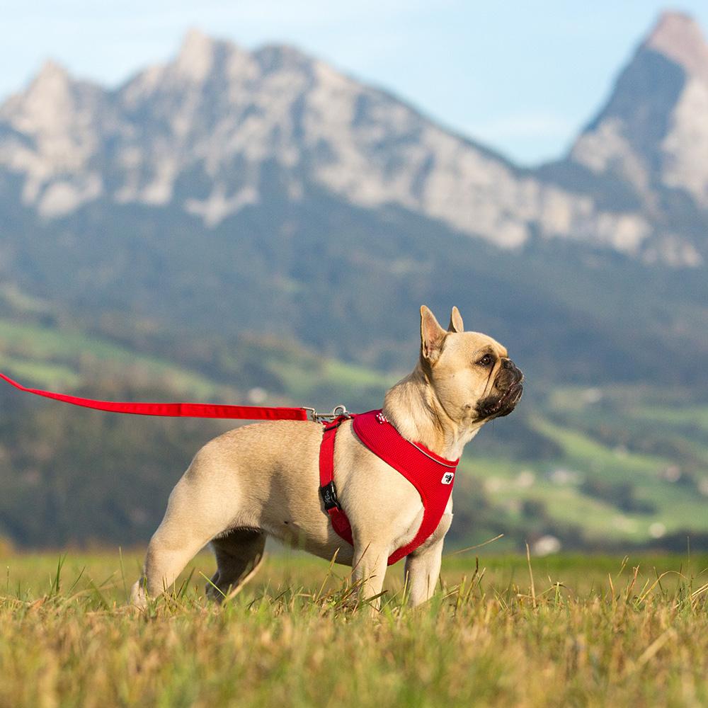Curli Brustgeschirr Basic Air Mesh für kleine Hunde, Bild 12