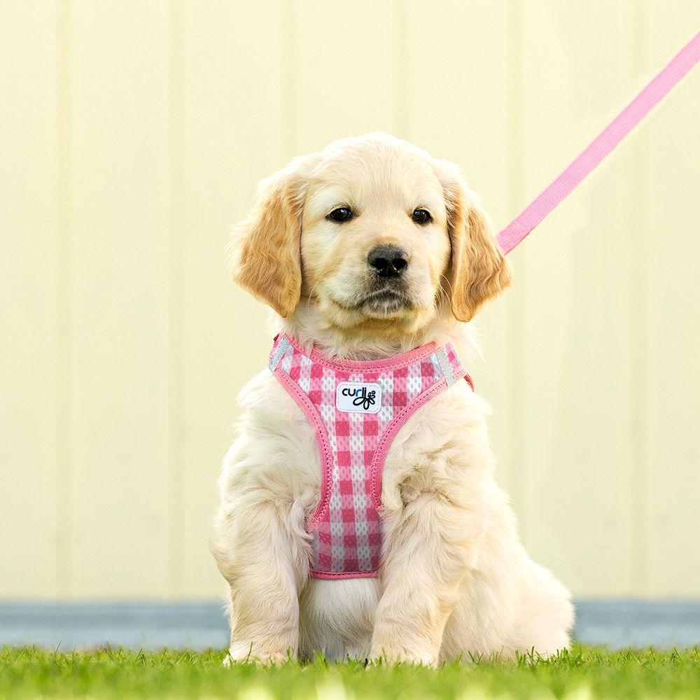 Curli Vest Geschirr mit Leine Puppy Welpen Set, Bild 2