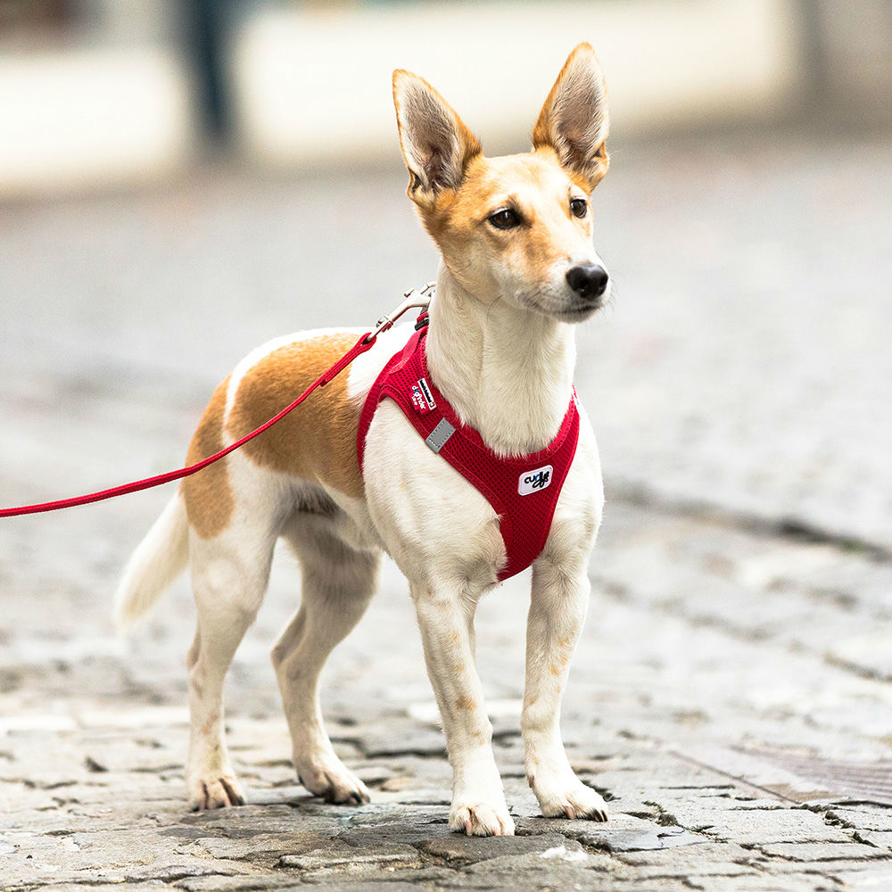 Curli Vest Hunde Geschirr Air-Mesh, Bild 2