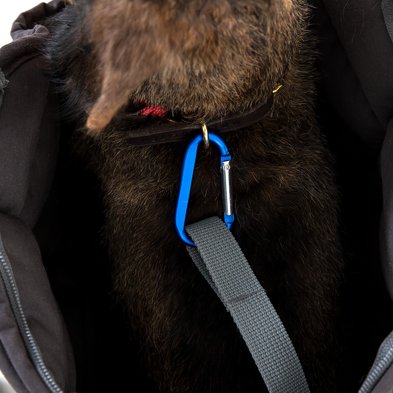 Doctor Bark Hundetragetasche, Bild 3