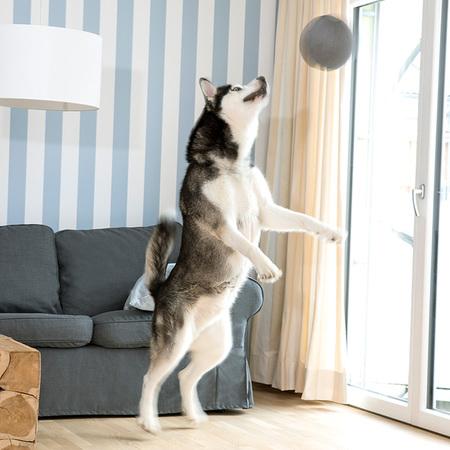 Doctor Bark Toy Ball - Hundespielzeug, Bild 2