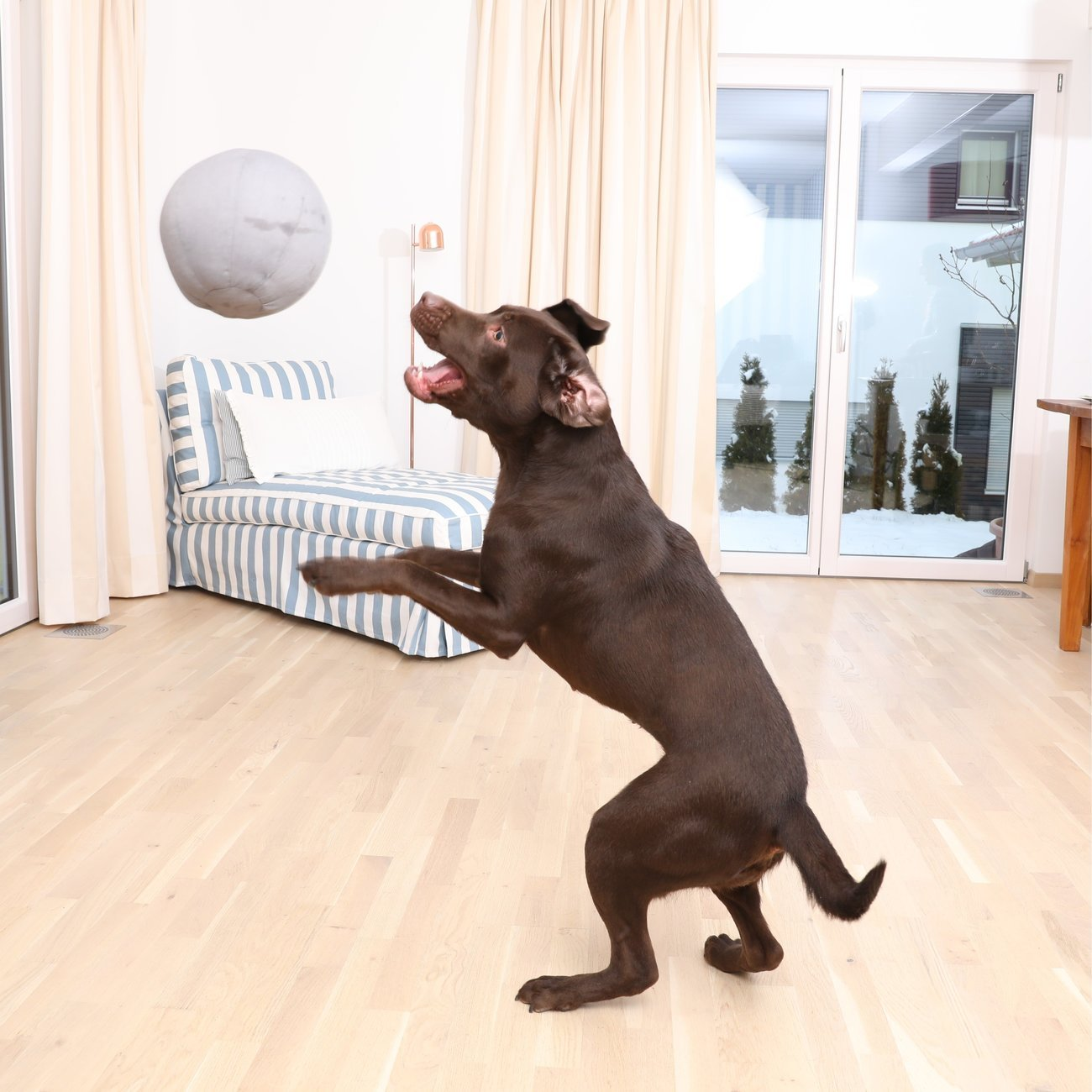 Doctor Bark Toy Ball - Hundespielzeug, Bild 4