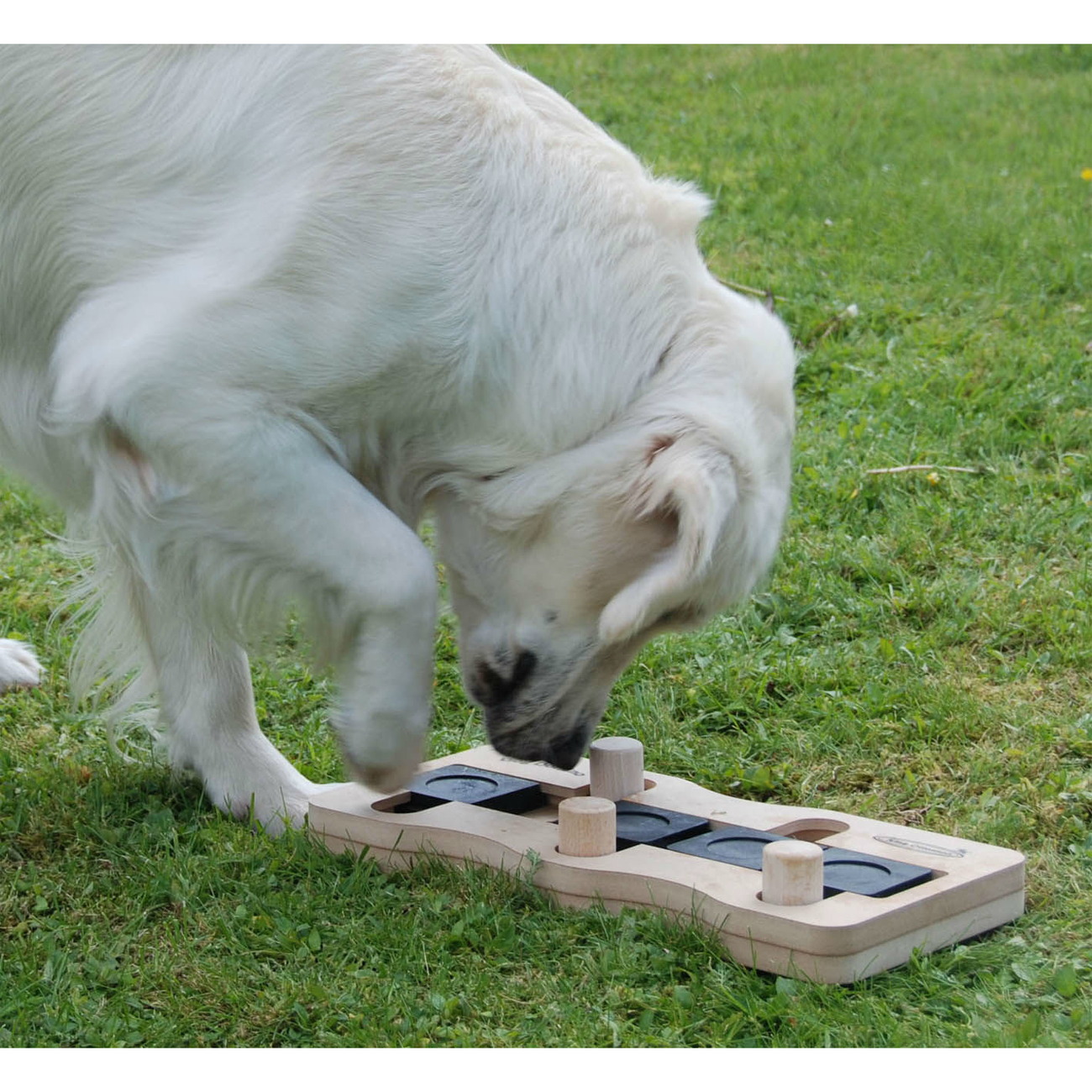 Nina Ottosson Dog Domino Intelligenzspielzeug von Nina Ottosson, Bild 3
