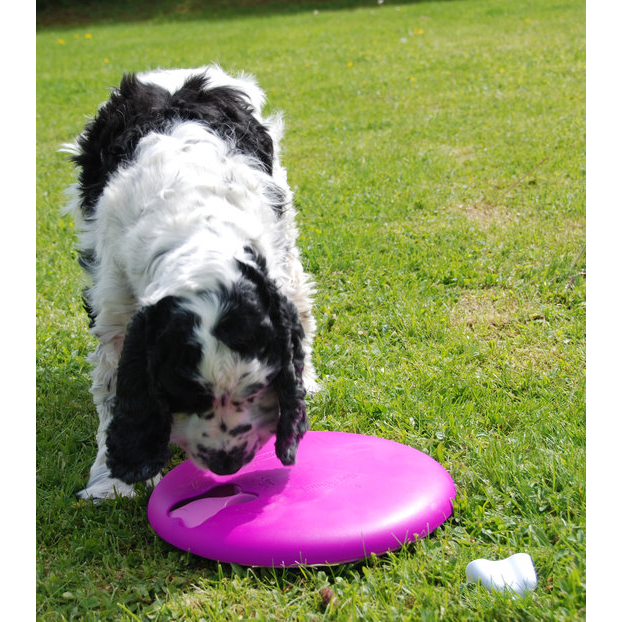 Nina Ottosson Dog Spinny Plastik, Bild 2
