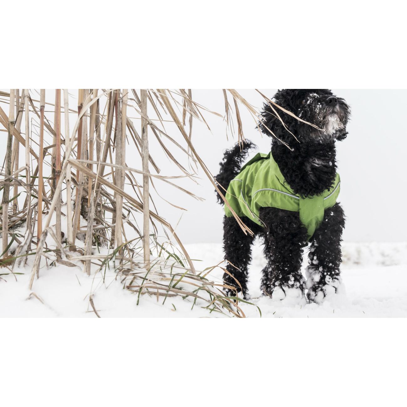 DogBite Hunde Ganzjahres Regenjacke Matt, Bild 10