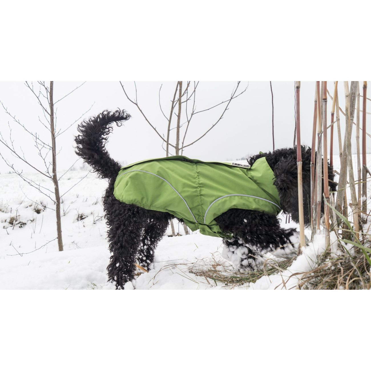 DogBite Hunde Ganzjahres Regenjacke Matt, Bild 11