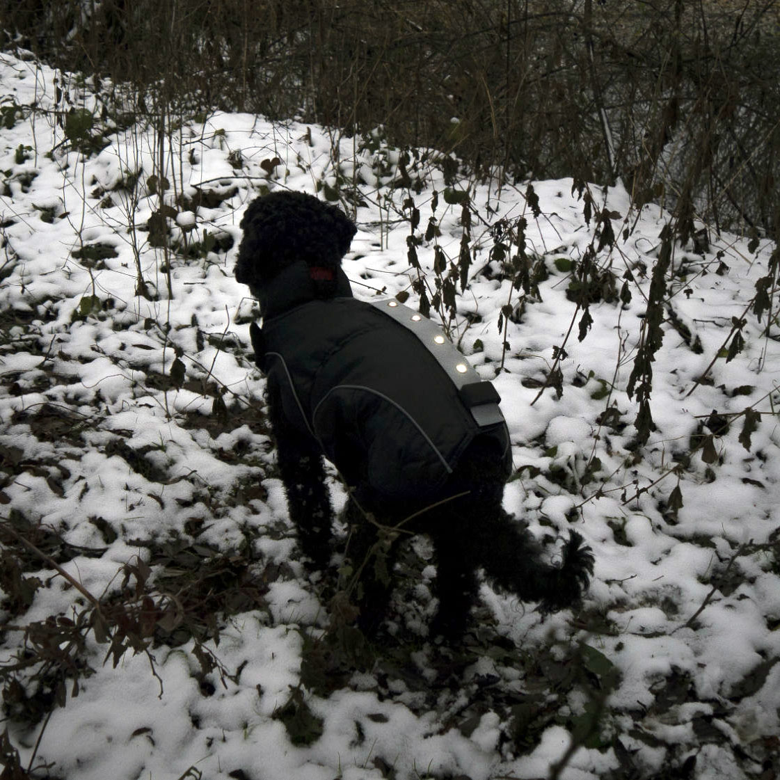 DogBite Hunde Leucht-Winterjacke mit LED, Bild 3
