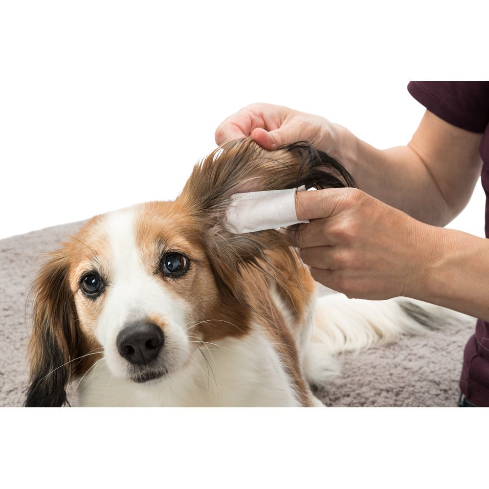 TRIXIE Ear Care Ohrenpflege Fingerpads 29392, Bild 2