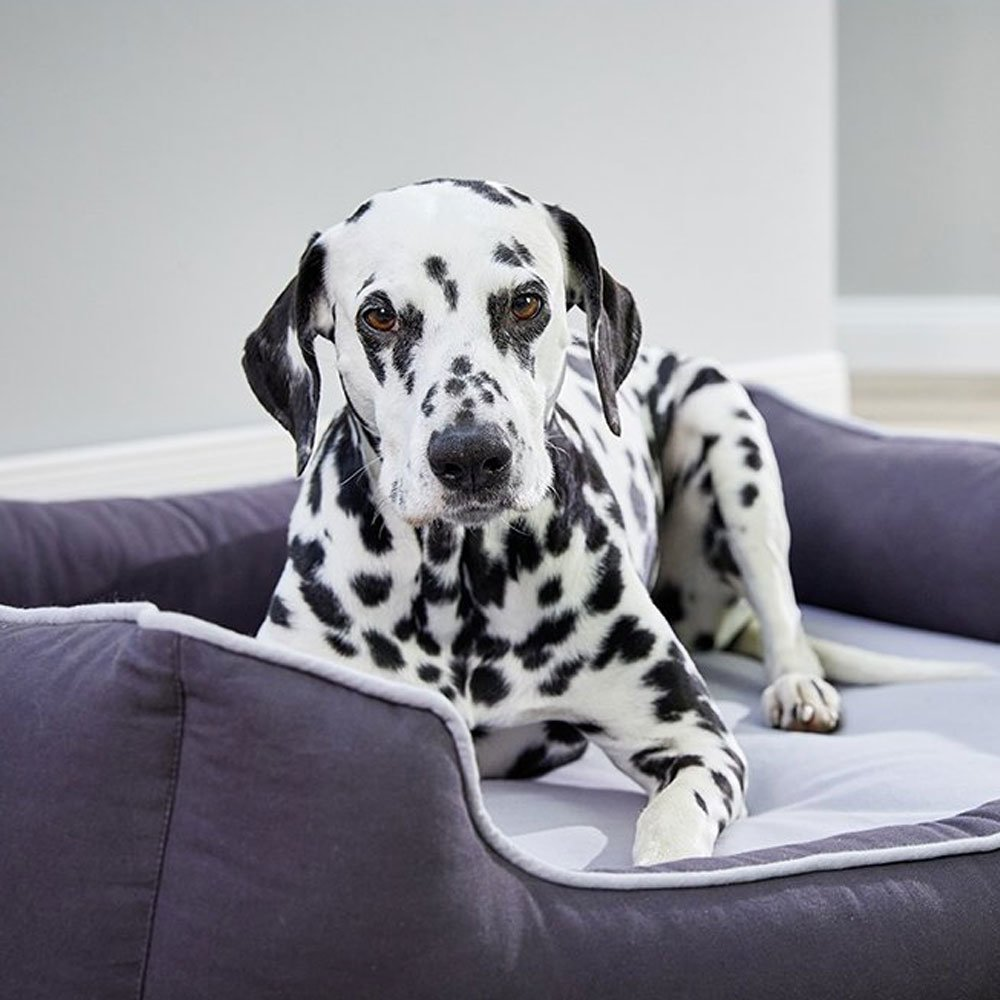 Wolters Eco Well Hunde Lounge, Bild 5