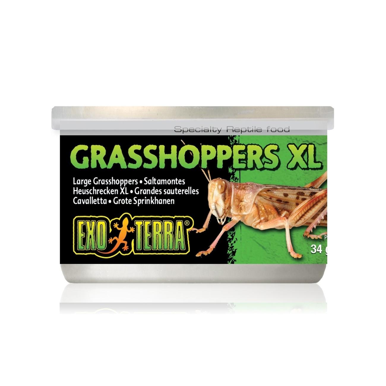 Hagen Exo Terra - Insekten in Dosen, Grashüpfer XL 34 g