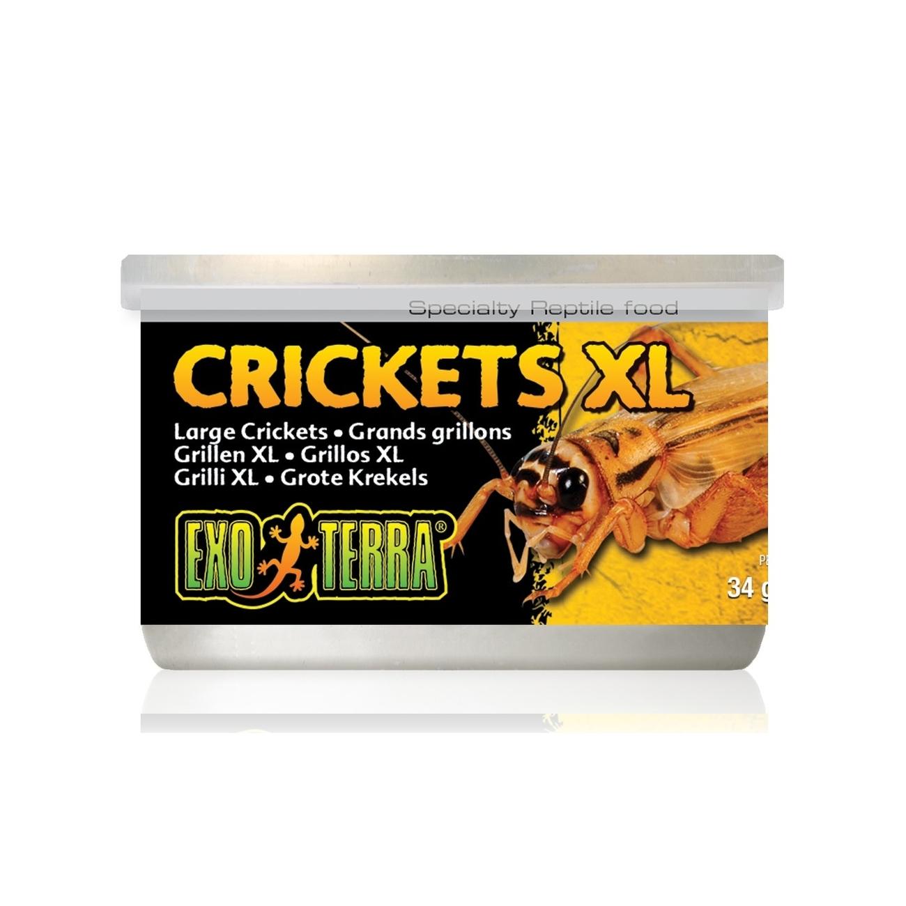 Hagen Exo Terra - Insekten in Dosen, Grille XL 34 g