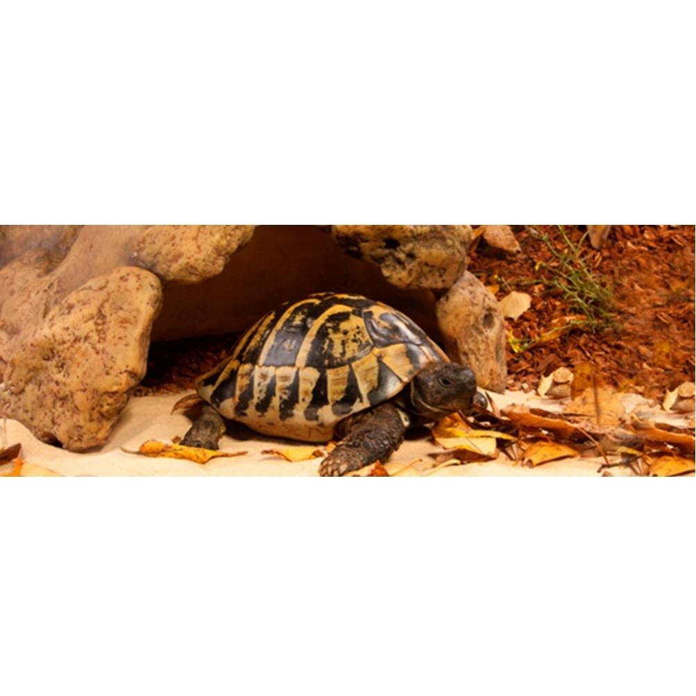 Exo Terra -  Landschildkröten Höhle, Bild 2