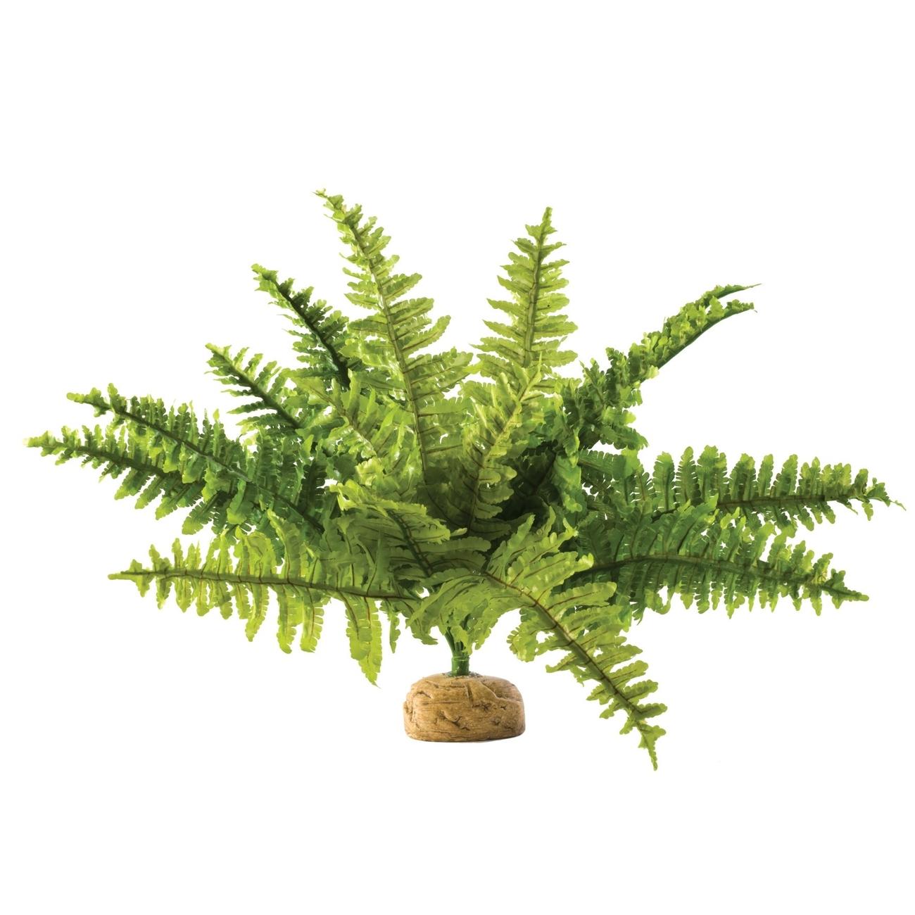 Exo Terra -  Regenwald Bodenpflanzen, Bild 3