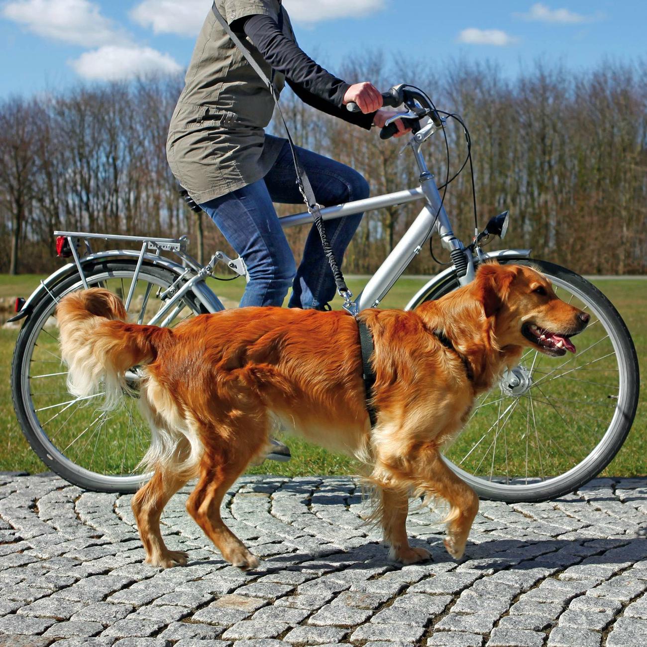 TRIXIE Fahrradleine und Joggingleine für Hunde 1282