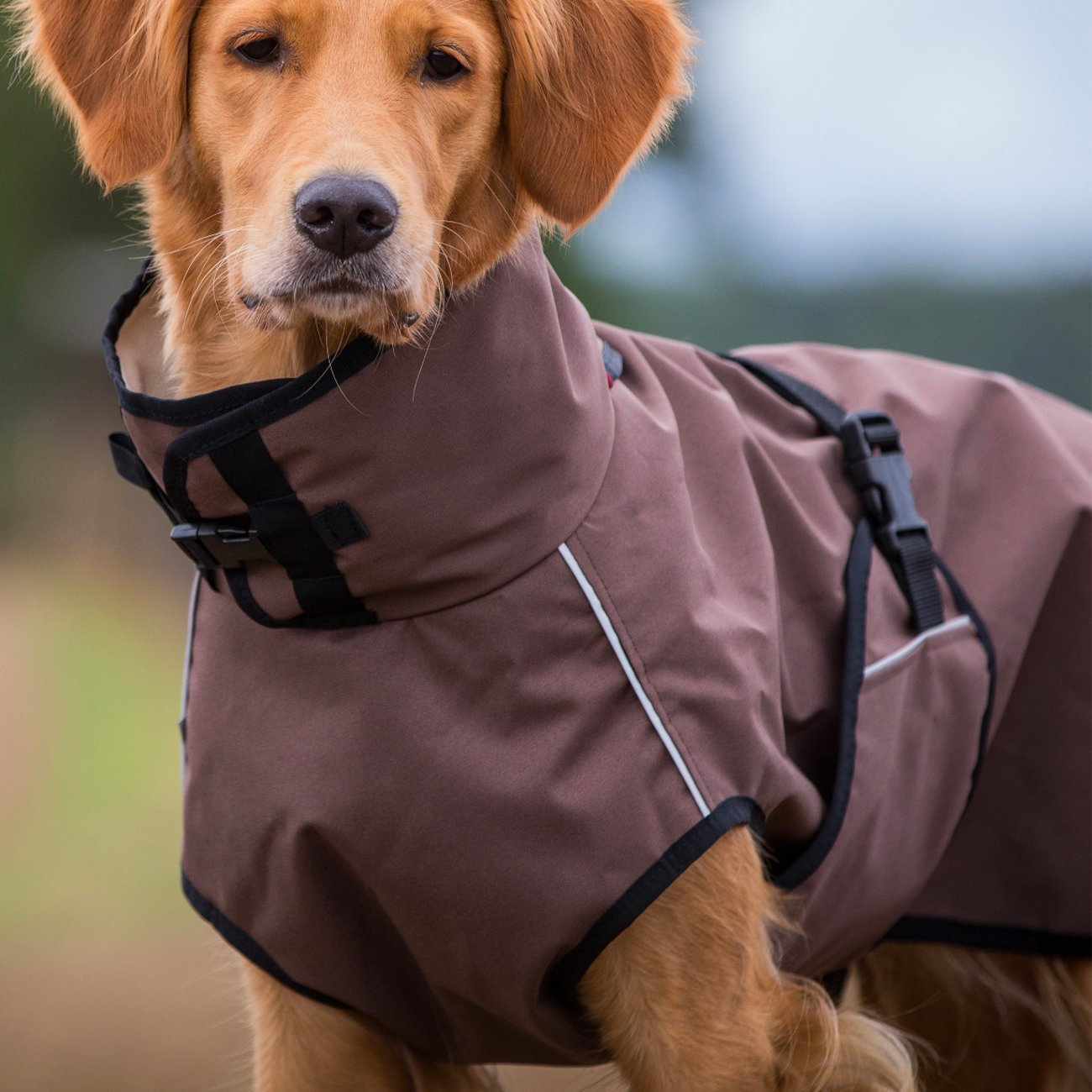 ActionFactory fit4dogs Active Cape LIGHT Hundemantel, Bild 3
