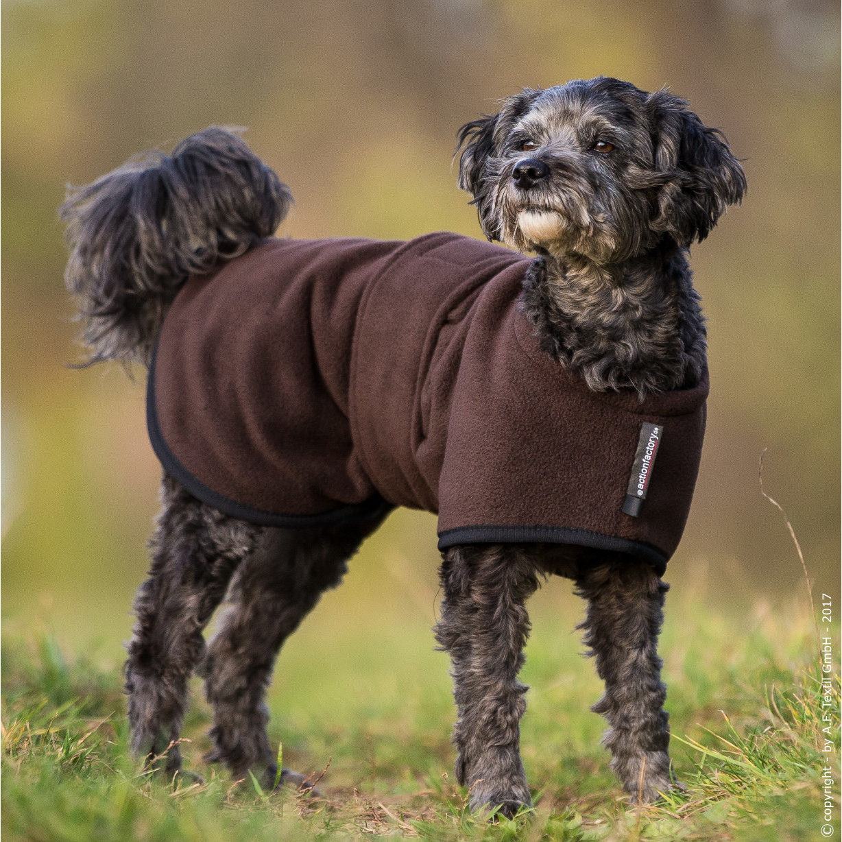 fit4dogs Warmup Cape Mini Classic Wende-Hundemantel, Bild 6