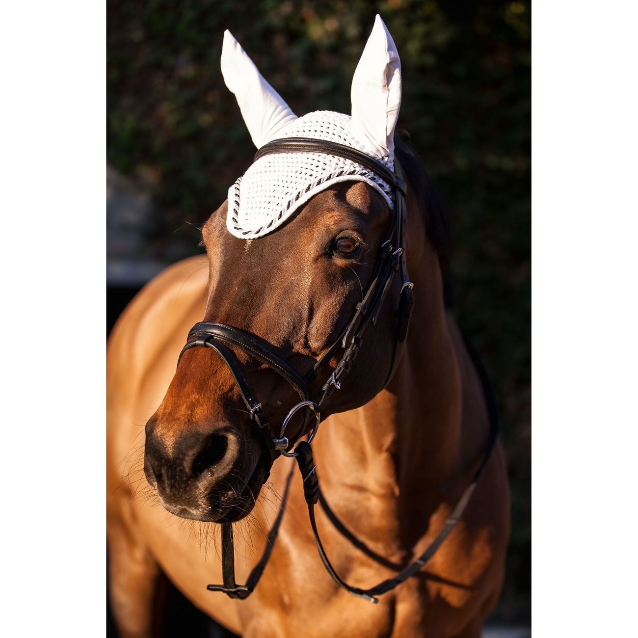 Covalliero Fliegenhaube Classic für Pferde, Bild 2