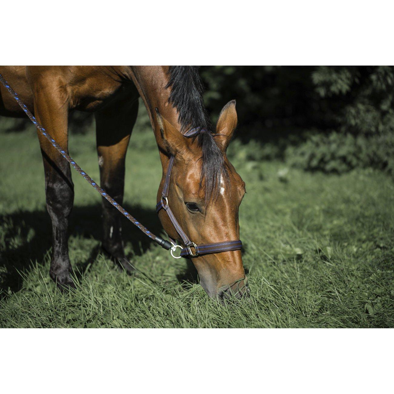 GoLeyGo Führstrick 2.0 für Pferde, Bild 12
