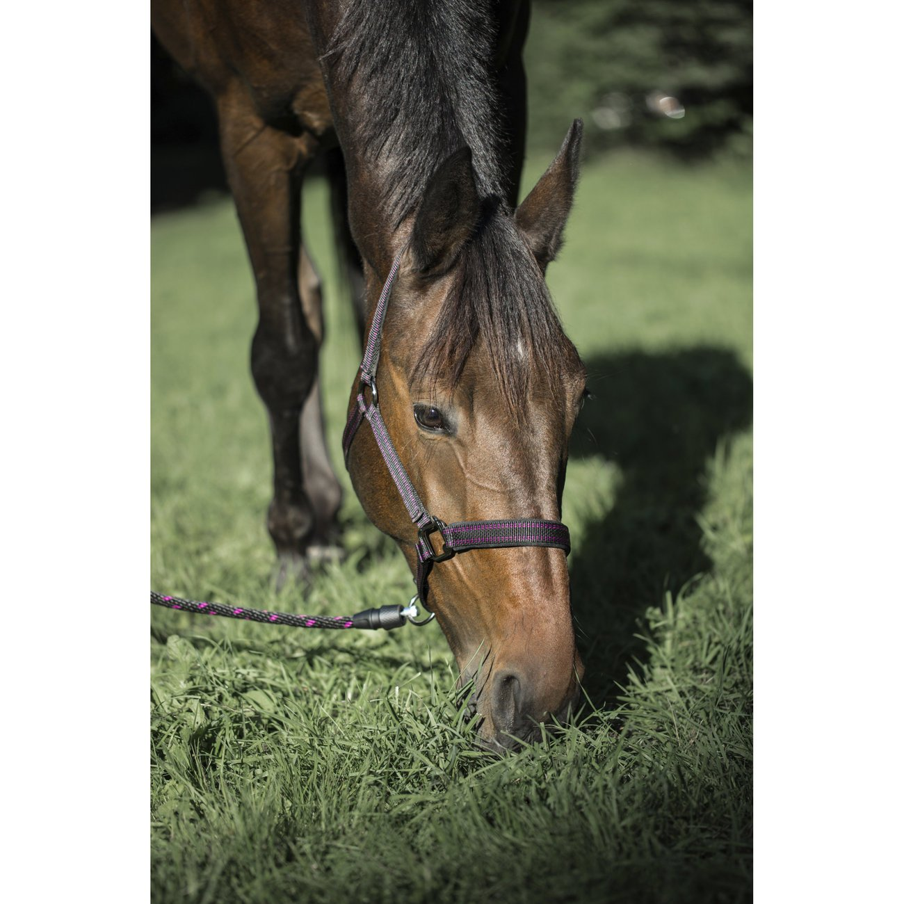 GoLeyGo Führstrick 2.0 für Pferde, Bild 14