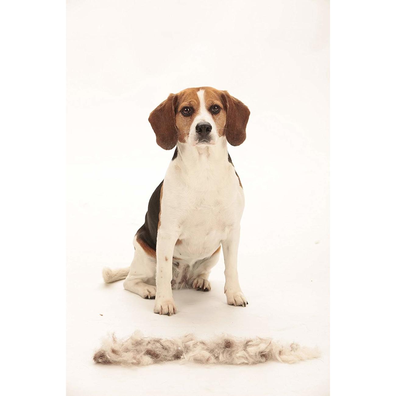FURminator Hund Kurzhaar, Bild 11