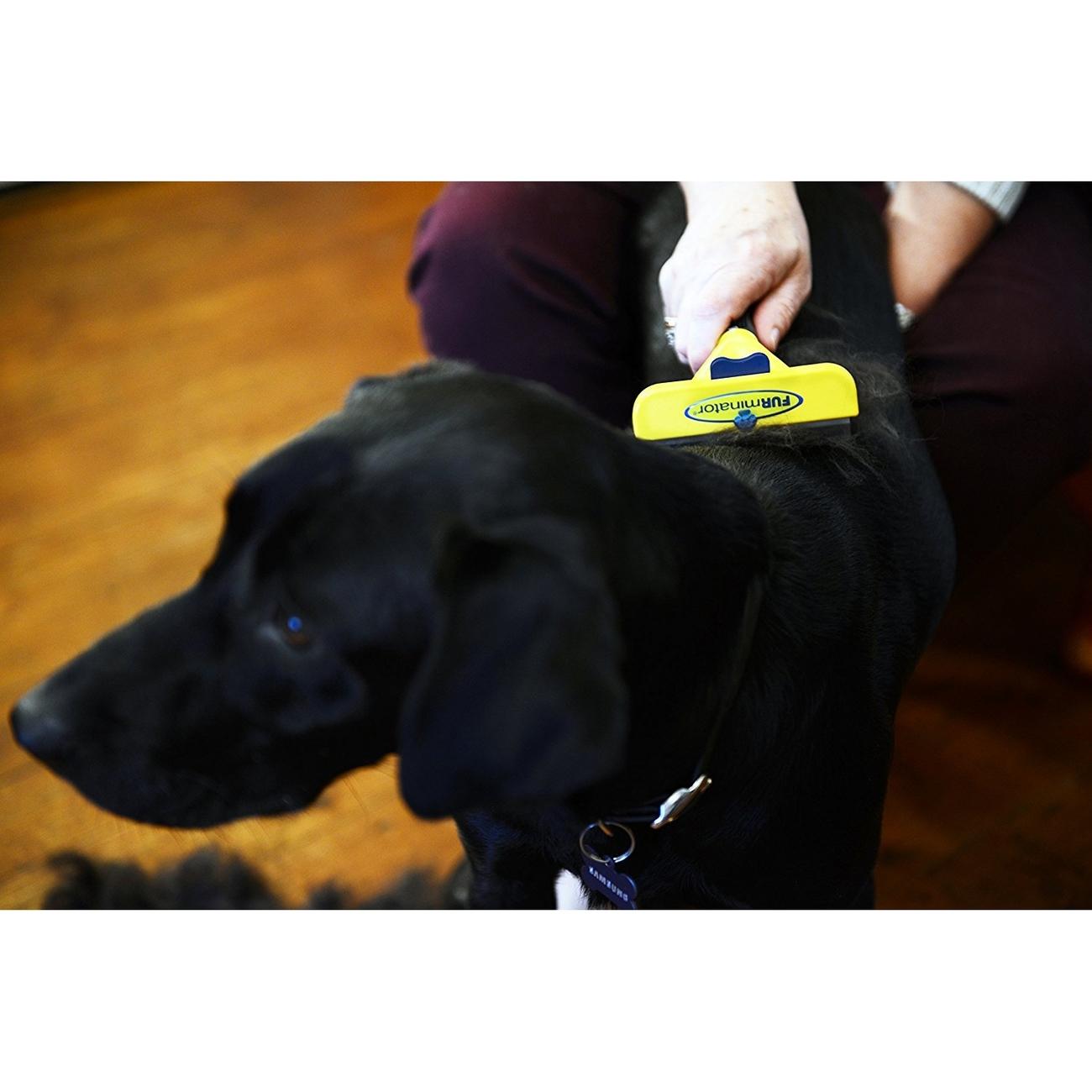 FURminator Hund Kurzhaar, Bild 13
