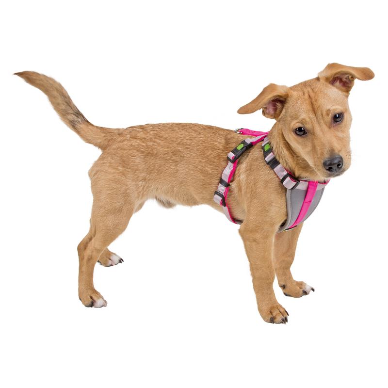 Kerbl Geschirr für kleine Hunde und Welpen, Bild 3