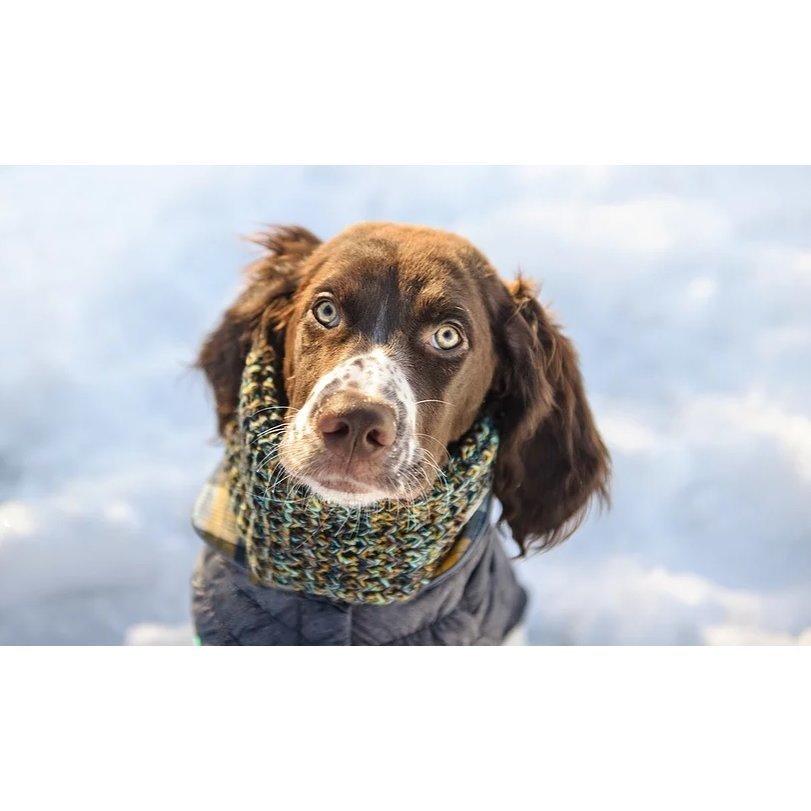 GF Pet Hundeschal auch für Frauchen, Bild 2
