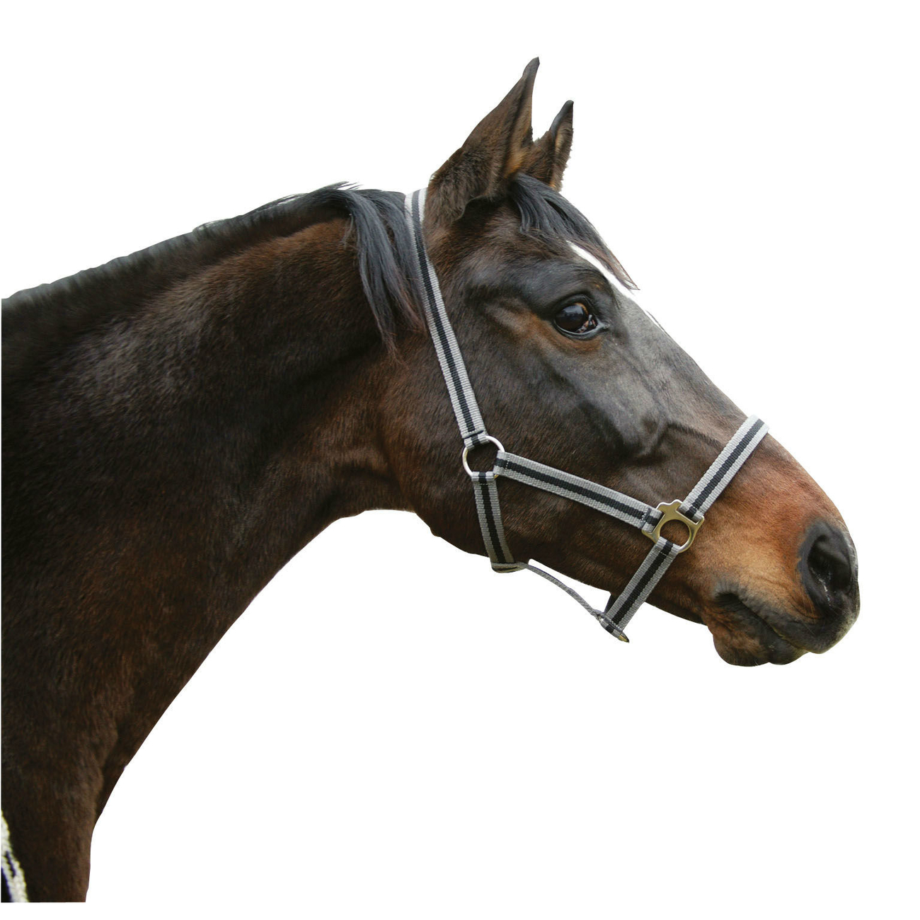 Covalliero Pferdehalfter HIPPO aus Nylon