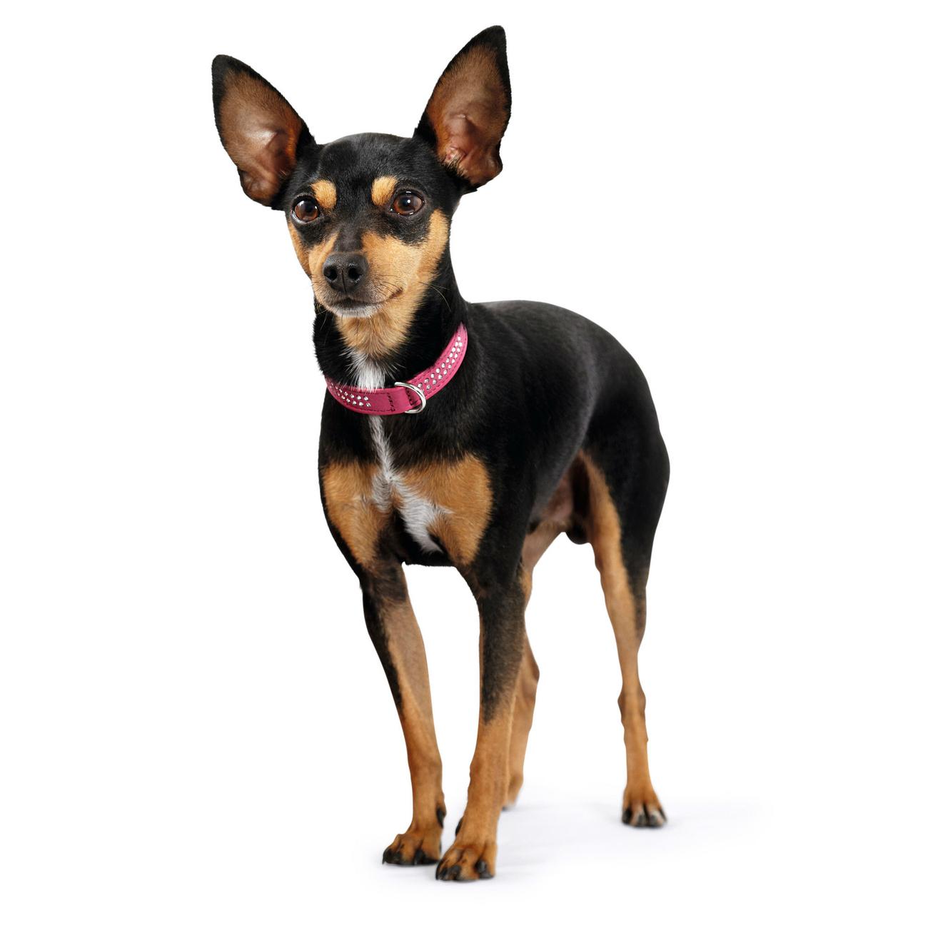 Hunter Halsband Swarowski Diamond Petit für kleine Hunde 47724, Bild 5