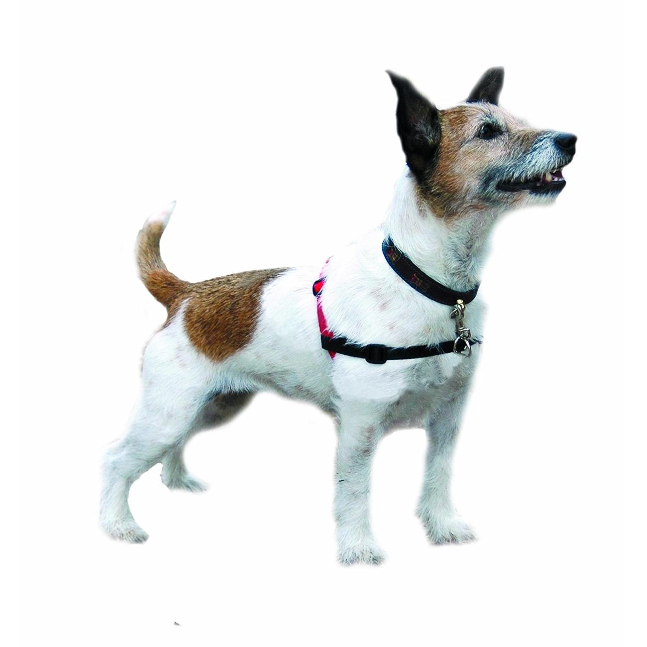 Company of Animals HALTI Harness Ausbildungsgeschirr für Hunde, Bild 3