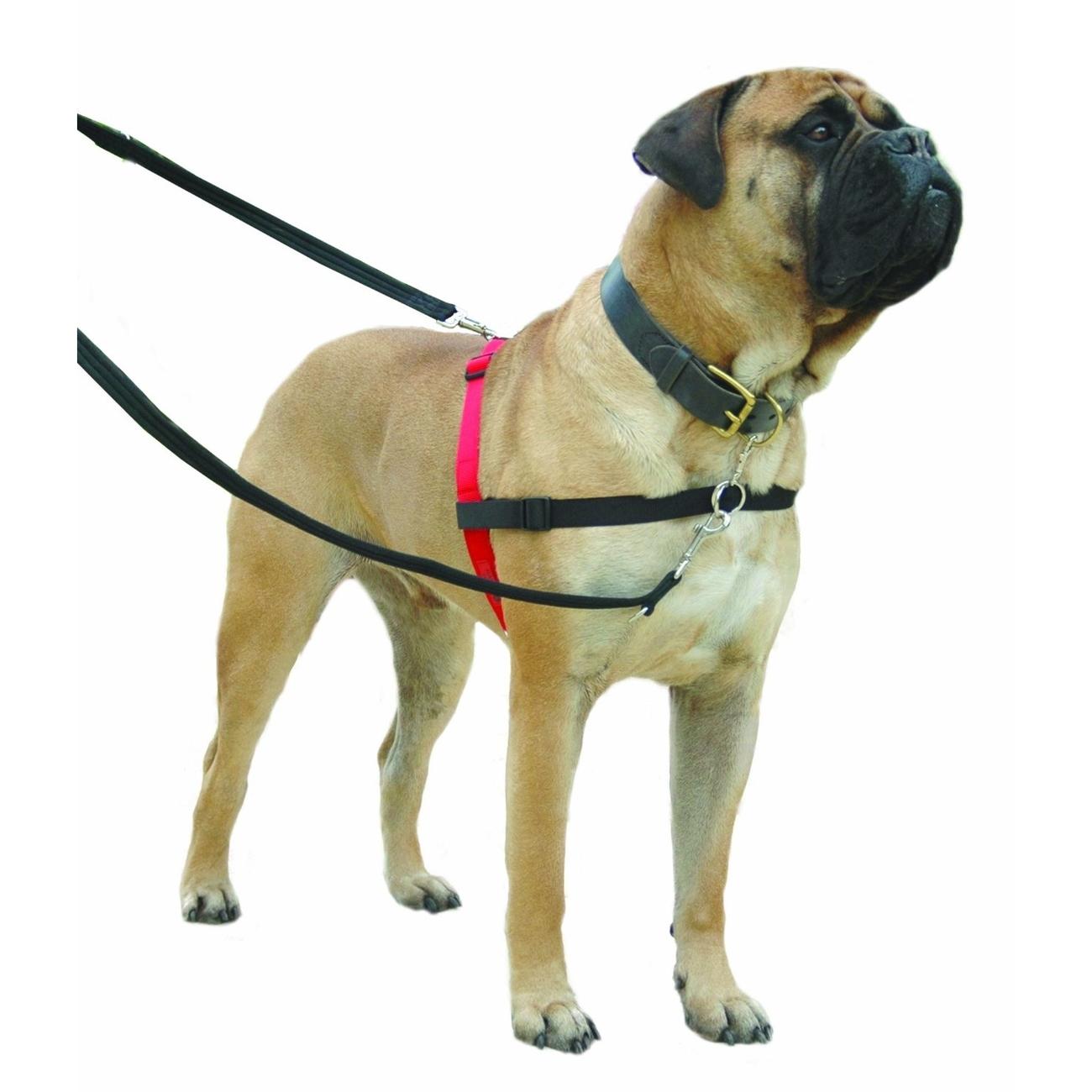 Company of Animals HALTI Harness Ausbildungsgeschirr für Hunde